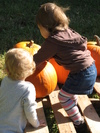 Pumpkin_patch_016_2