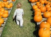 Pumpkin_patch_045_2